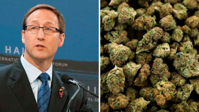 Photo of Peter MacKay flip-flops on marijuana stance, says he won't rescind legalization