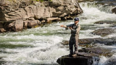 Photo of Record runs of salmon in the Gaspé rivers