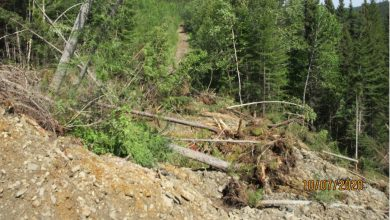 Photo of A landslide on the 839 Murdoch / Gaspé regional forest trail