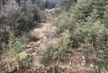 Photo of The destruction of a forest road in Haut-Gaspésie criticized