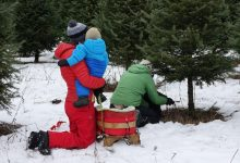 Photo of Highly coveted this year, natural Christmas trees are finding buyers sooner