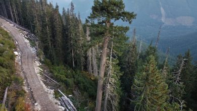 Photo of The revision of the forestry regime far from achieving unanimity